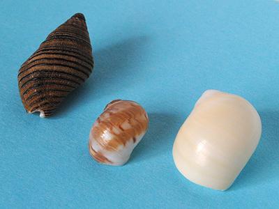 貝殻拾い_採集結果