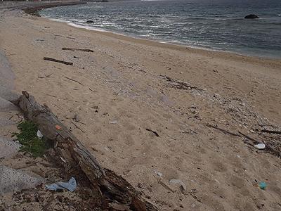 貝殻拾い_海岸