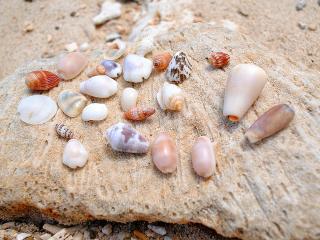 いんぶビーチ採集結果