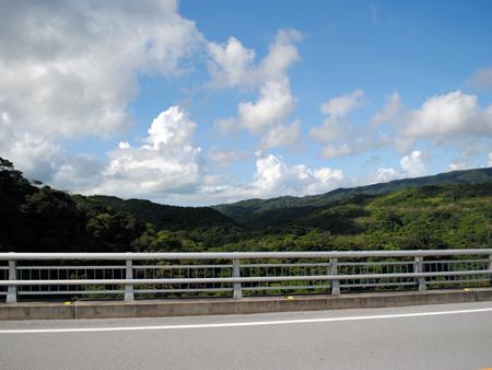 沖縄の森01-01