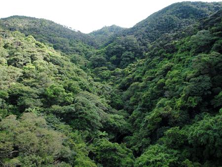 沖縄の森01-02