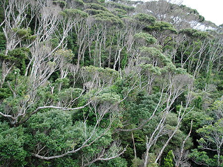 沖縄の森01-05