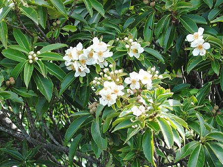 沖縄の森01-07