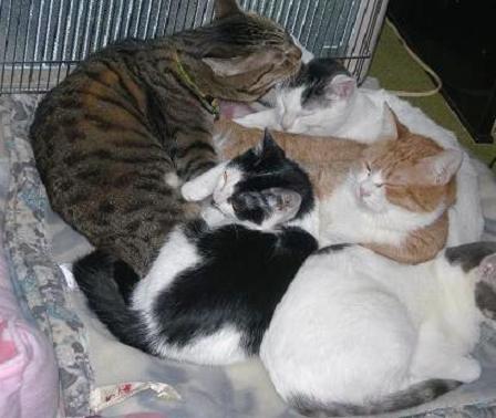 猫座布団2