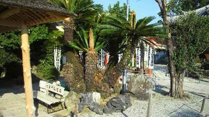一番札所曹源寺の中庭です。大きなお寺さんで、中庭もきれいです