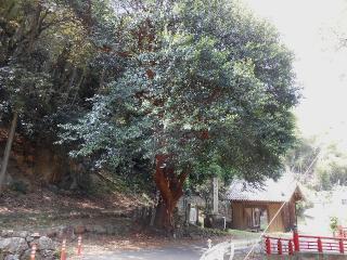 18恩山寺-毘蘭樹25