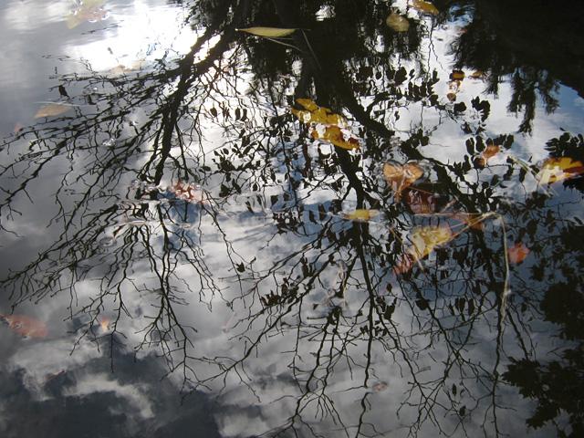 水面に映る秋