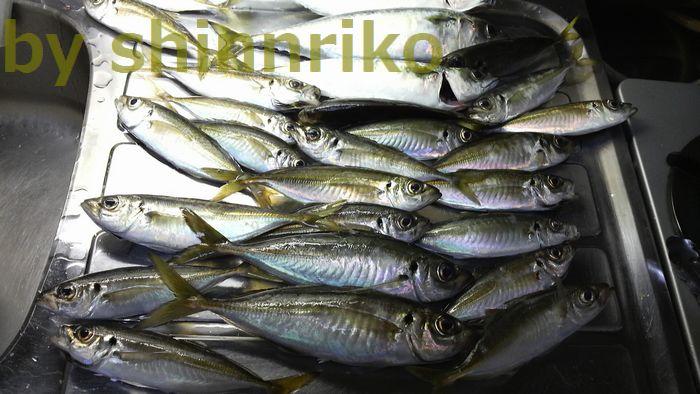 shinnrikoの釣果1