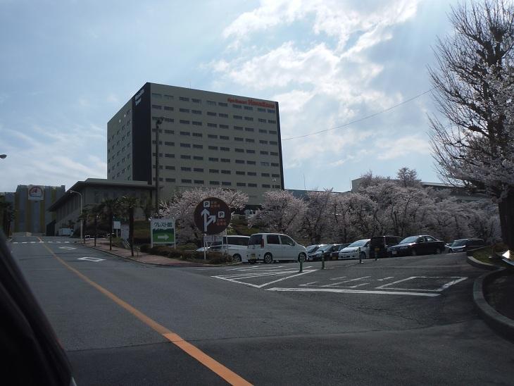 ハワイアンズ2012桜