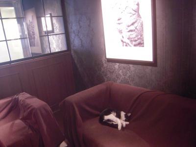 猫カフェ9