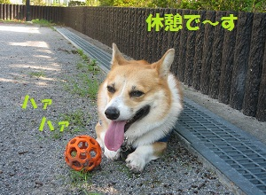 2011_0910_082645-IMG_7018小