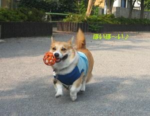 2011_0910_081638-IMG_7010小
