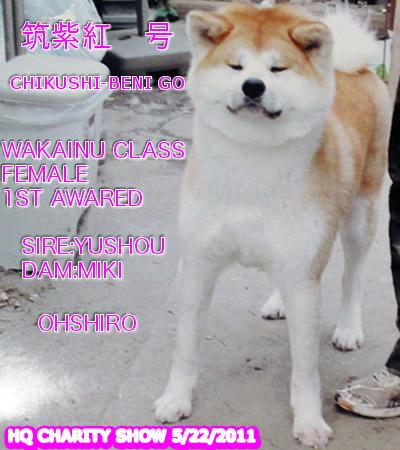 CHIKUSHIBENI511.jpg