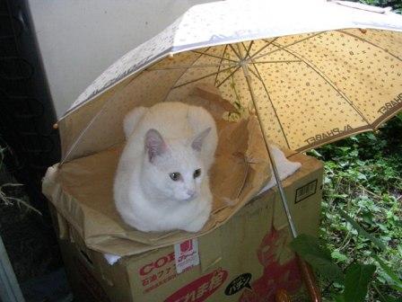 傘 しろ1 005