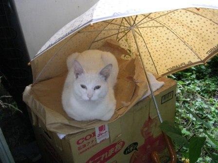 傘 しろ1 006