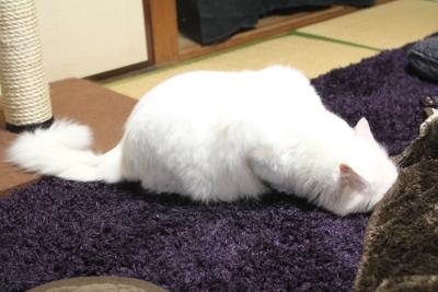kotatsu 2014 3 resized