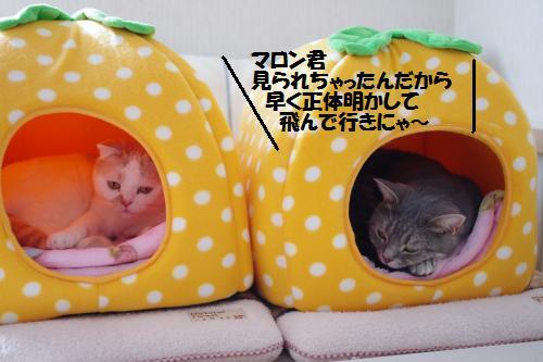 11amaon4.jpg