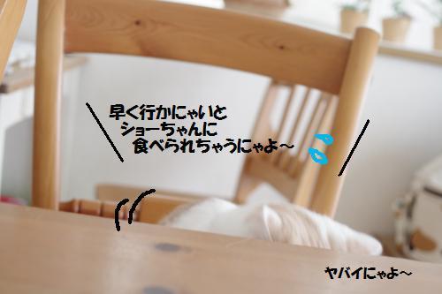a11mao6.jpg
