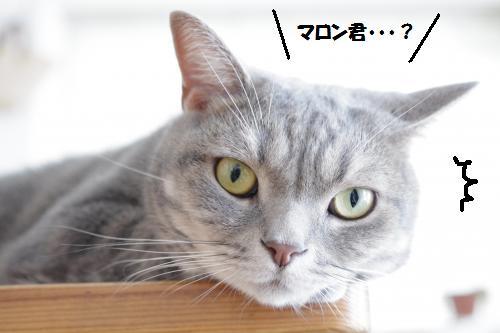 amaku2.jpg