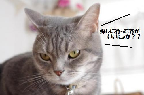 amaku6.jpg