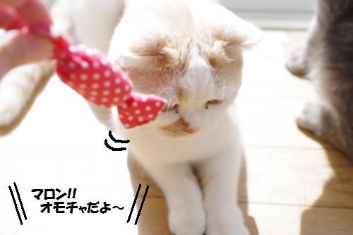 amamata1.jpg