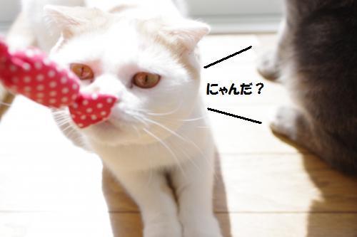 amamata2.jpg