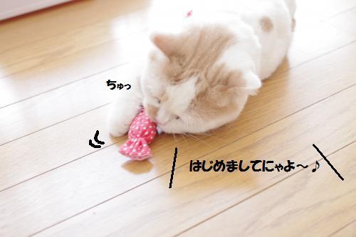 amamata3.jpg