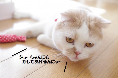 amamata5.jpg