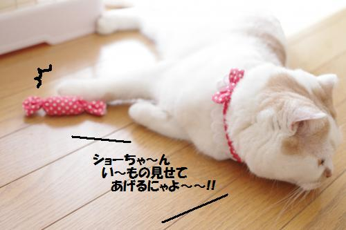 amamata6.jpg