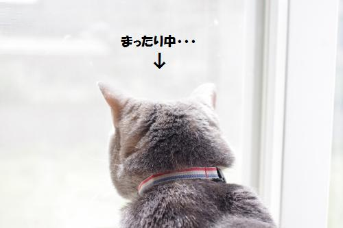 amamata7.jpg