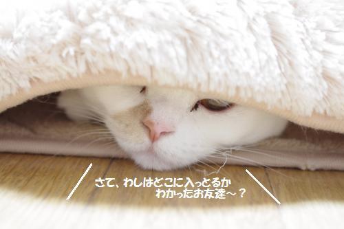amaoko2.jpg