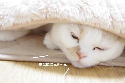 amaoko4.jpg
