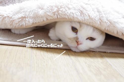 amaoko5.jpg