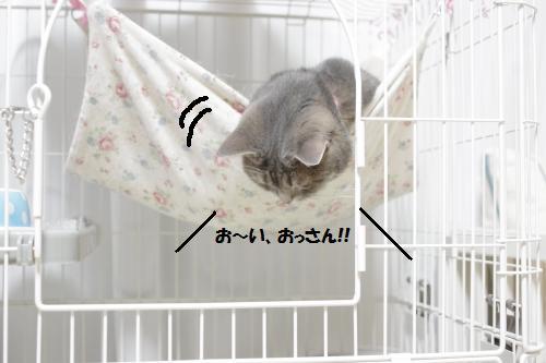 amaoko7.jpg