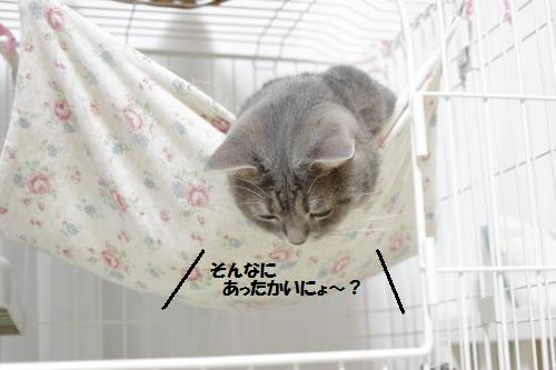 amaoko8.jpg