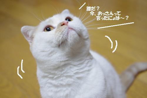 amaoko9.jpg