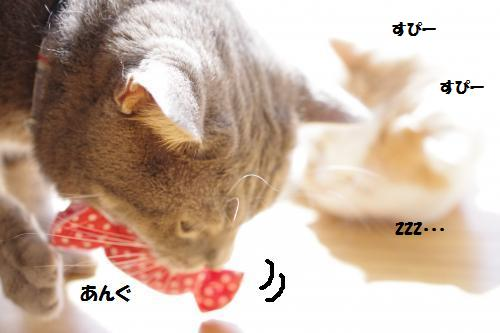 ashomata5.jpg