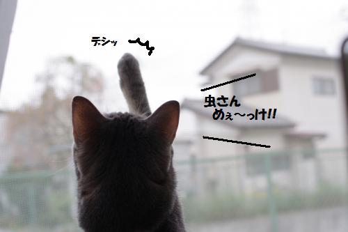 ashomus1.jpg