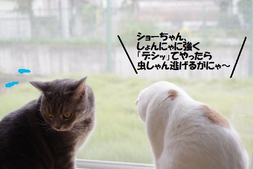 ashomus2.jpg