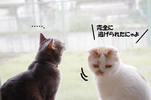 ashomus4.jpg