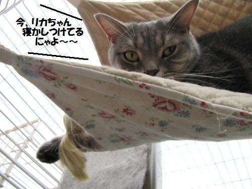 ashori2.jpg