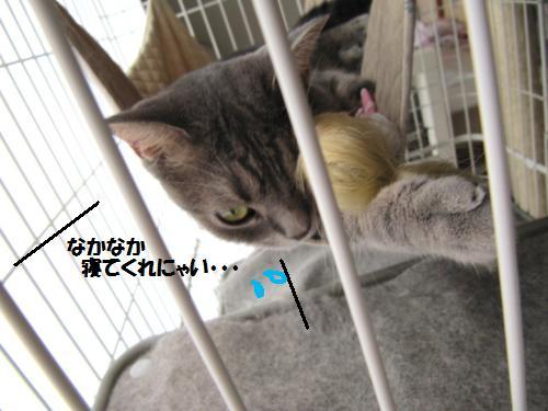 ashori3.jpg