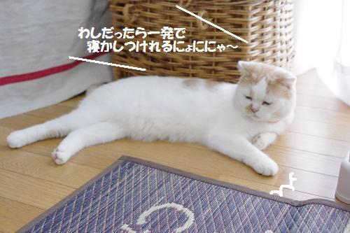 ashori6.jpg