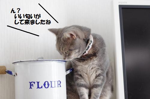 ashoryo2.jpg