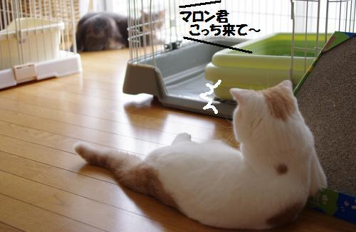 ashoto1.jpg
