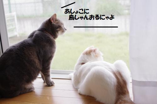 ashoto3.jpg