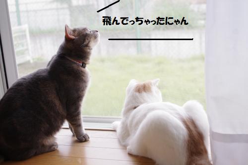 ashoto5.jpg