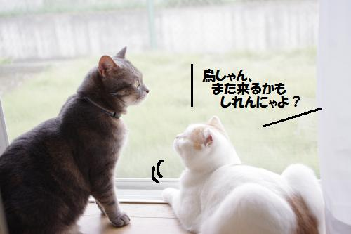 ashoto6.jpg