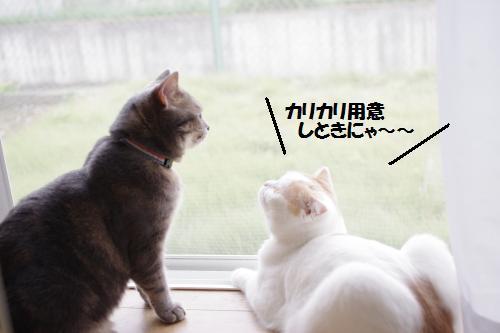 ashoto7.jpg