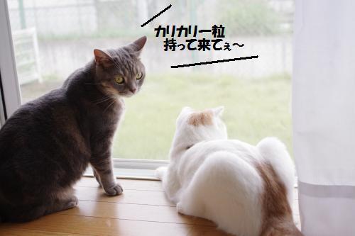 ashoto8.jpg